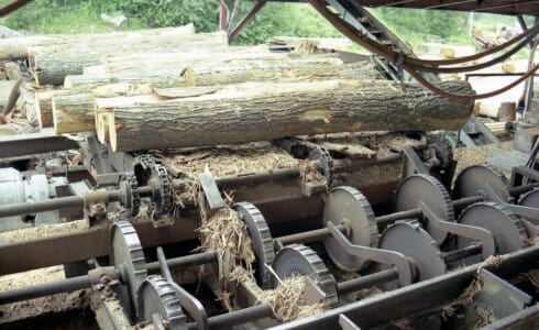 Logs going up the conveyor to the Saw Mill