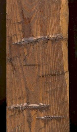 Minwax Early American Stain on Hand Hewn Pine