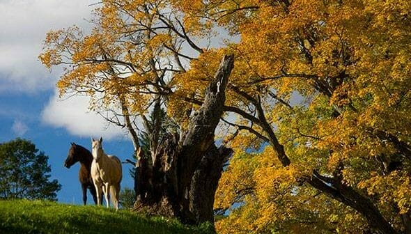Vermont Foliage Pictures