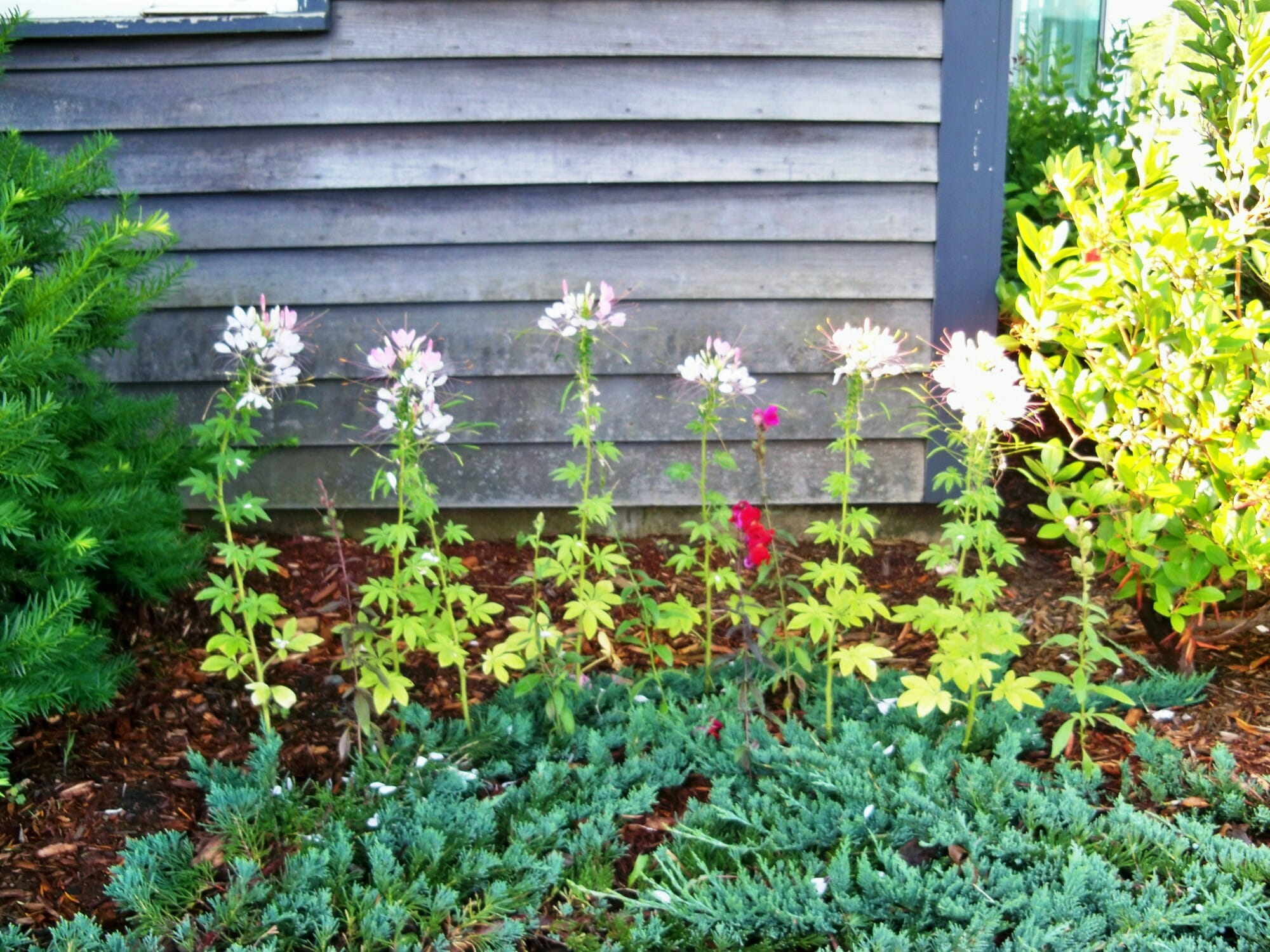 flowers-vermont-timber-works
