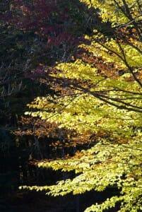 vermont-foliage
