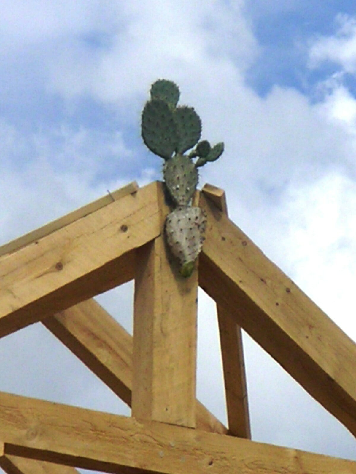 Topping Out - A Timber Frame Tradition