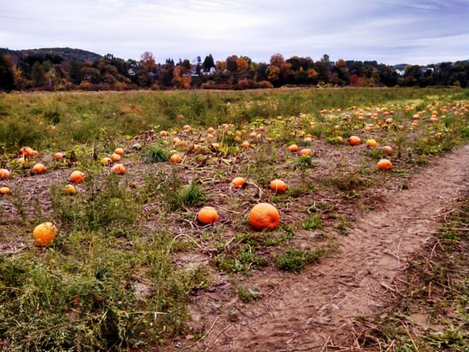 pumpkins-lake-runnemede-paradise-park-windsor-vermont