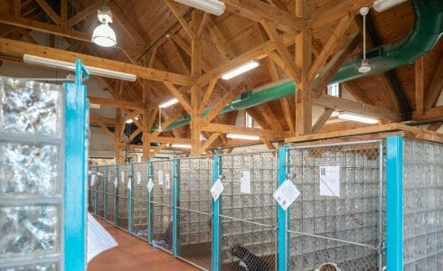 Heavy Timber Trusses and beams in the True Friends Animal Welfare Center in Montrose PA