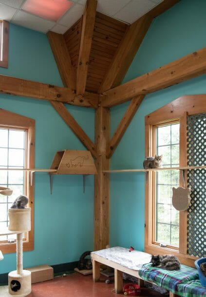 Cat shelter area in the True Friends Animal Welfare Center with Timber Posts and Beams in Montrose, PA